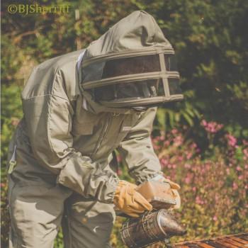 BeePro (SAS) leaning over hive 10 September 2014 wtmkd - KS.jpg USE WTMKD