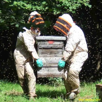 S66 CARRYING HIVES - Quinc Wtmkd USE copy