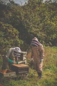 Beekeepers wearing BJ Sherriff protective apiarist clothing