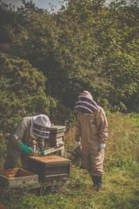 Beekeepers wearing BJ Sherriff protective apiarist clothing