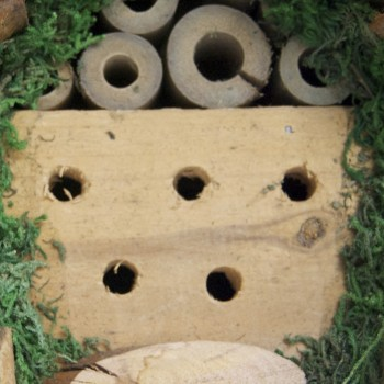 Insect and Bee Hotel2- Cropped on centre